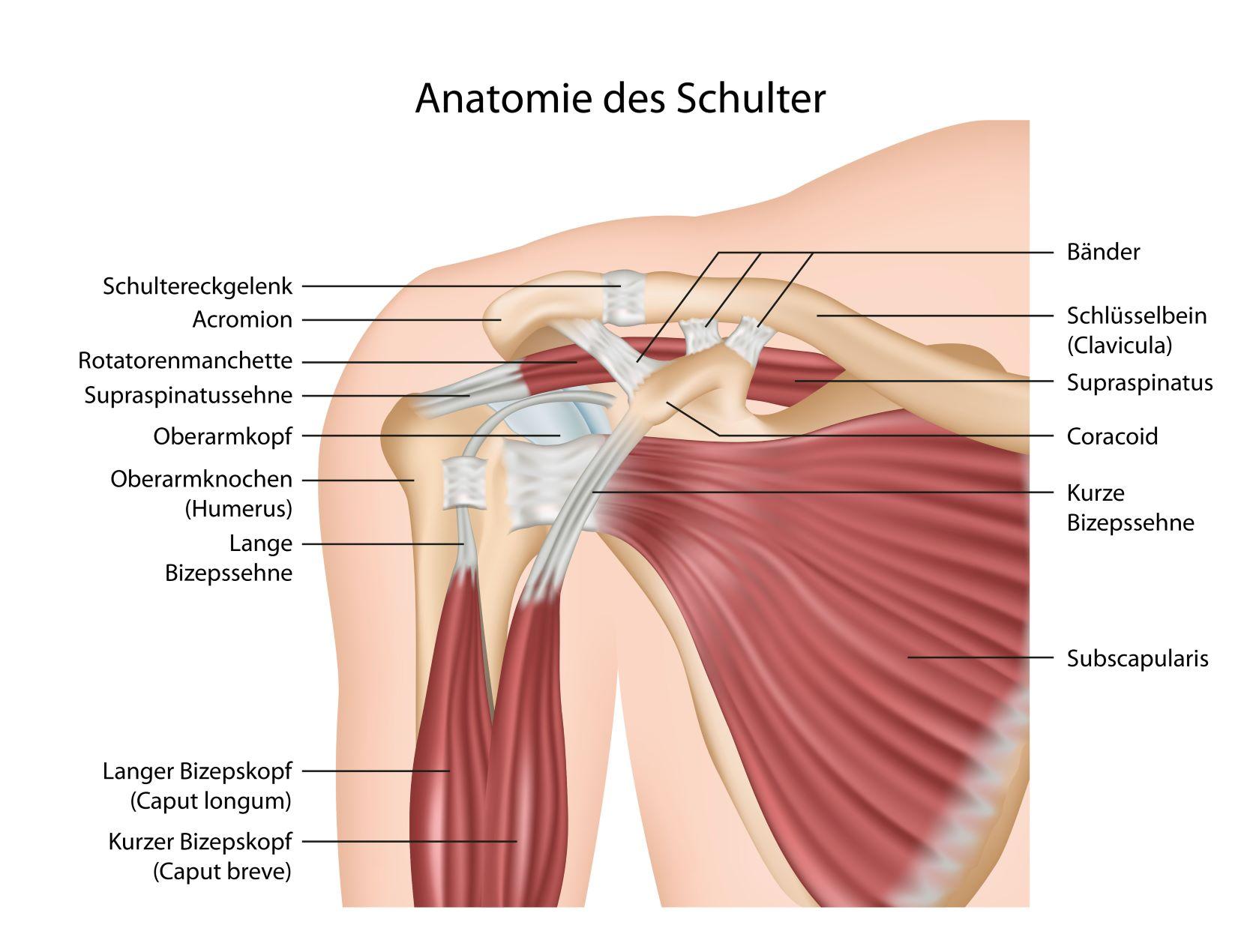 Sehnenriss in der Schulter: Reparatur mit Flechttechnik